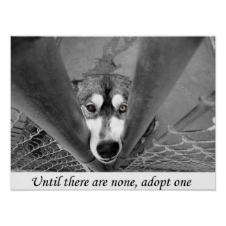 Until there are none, adopt one poster