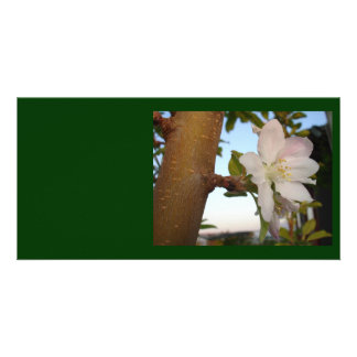 Untouched Apple Blossom Photo Card Template