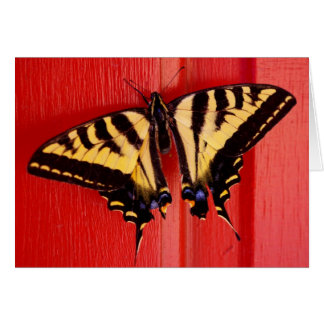 unusual background swallowtaill butterfly greeting card