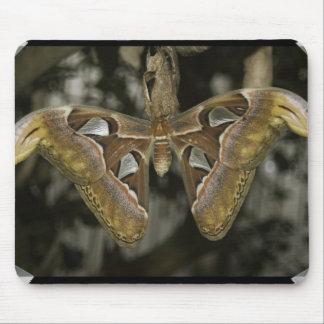 Unusual Moth Mouse Pad