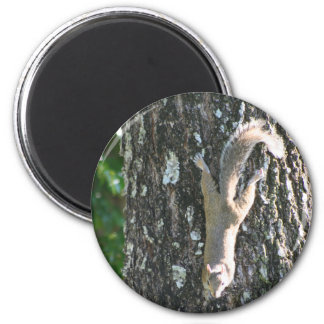 Up a Tree! magnet