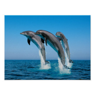 Up Up Up Dolphins Print