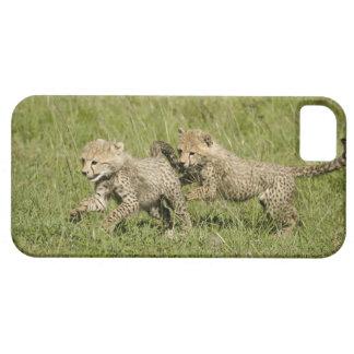 Upper Mara, Masai Mara Game Reserve, iPhone 5 Cover