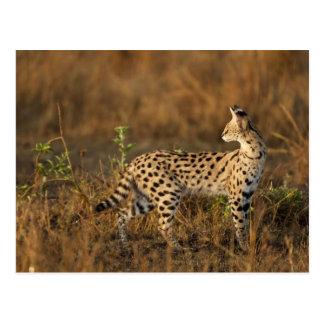 Upper Mara, Masai Mara Game Reserve, Kenya, Postcard