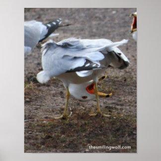 Upside-Down Gull Print