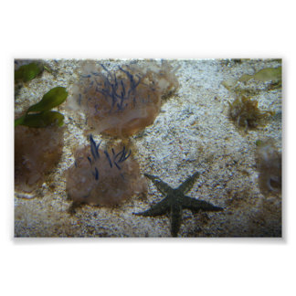 Upside-down Jellyfish Photo Print