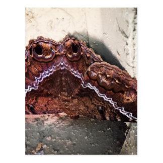 Upside down moth postcard