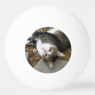 Upside Down Tabby Three Star Ping Pong Ball