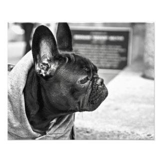 Urban bulldog photo