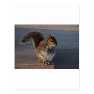 Urban Squirrel. Postcard