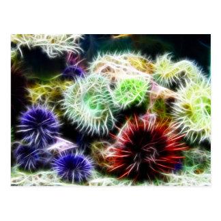 Urchin Bed Postcard