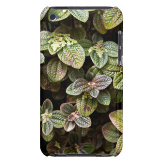 Urticacae Case-Mate iPod Touch Barely There Case