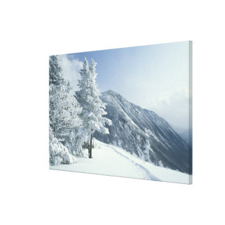 US, NH, Snow covered trees Trails Snoeshoe Gallery Wrapped Canvas