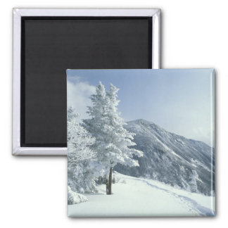 US, NH, Snow covered trees Trails Snoeshoe Square Magnet