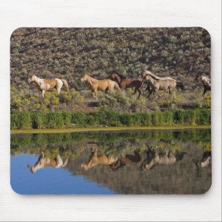 US, Oregon, Seneca, Ranch living at The 2 Mouse Pad