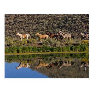 US, Oregon, Seneca, Ranch living at The 2 Postcard