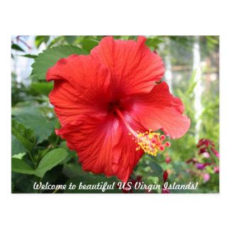 US Virgin Islands - Hibiscus Postcard
