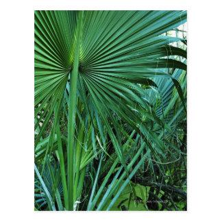 US Virgin Islands, St. Thomas, Tropical leaves Postcard
