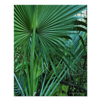 US Virgin Islands, St. Thomas, Tropical leaves Poster