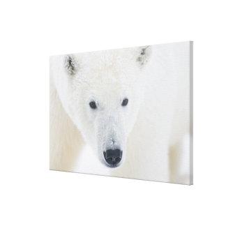 USA, Alaska, 1002 Coastal Plain of the Arctic 3 Gallery Wrapped Canvas