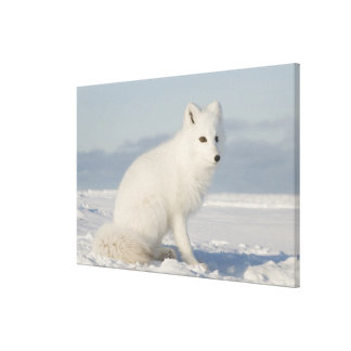 USA, Alaska, 1002 Coastal Plain of the Arctic 4 Gallery Wrap Canvas