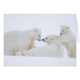 USA, Alaska, 1002 Coastal Plain of the Arctic Card
