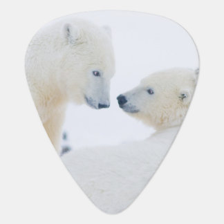USA, Alaska, 1002 Coastal Plain of the Arctic Plectrum