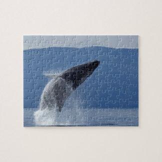 USA, Alaska, Angoon, Humpback Whale (Megaptera Puzzles