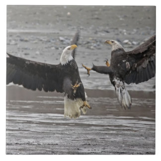USA, Alaska, Chilkat Bald Eagle Preserve. Two Ceramic Tile