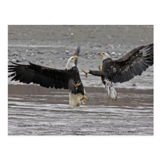 USA, Alaska, Chilkat Bald Eagle Preserve. Two Postcard