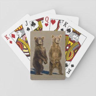 USA. Alaska. Coastal Brown Bear cubs watch their Playing Cards