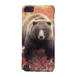 USA, Alaska, Denali NP, female Grizzly Bear iPod Touch 5G Covers