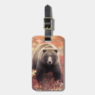 USA, Alaska, Denali NP, female Grizzly Bear Luggage Tag