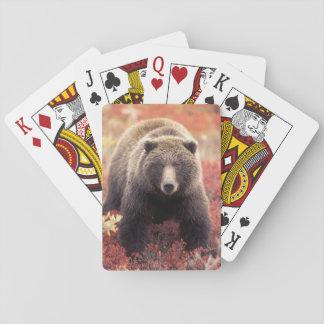 USA, Alaska, Denali NP, female Grizzly Bear Poker Deck