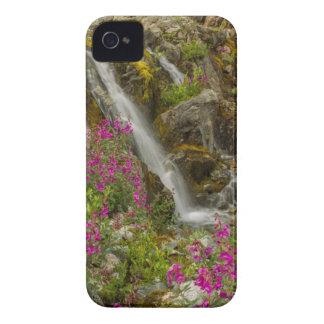 USA, Alaska, Glacier Bay National Park. Fireweed Case-Mate iPhone 4 Case