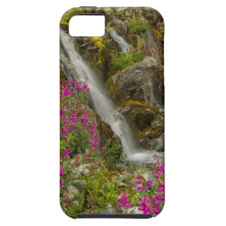 USA, Alaska, Glacier Bay National Park. Fireweed iPhone 5 Cases