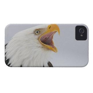 USA, Alaska, Homer. Bald eagle screaming. Credit iPhone 4 Case-Mate Case