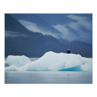 USA, Alaska, Inside Passage. Bald eagle perched Poster