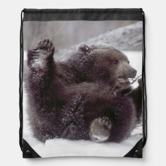 USA, Alaska. Juvenile grizzly plays with tree Drawstring Bags
