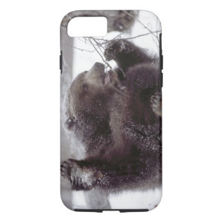 USA, Alaska. Juvenile grizzly plays with tree iPhone 7 Case