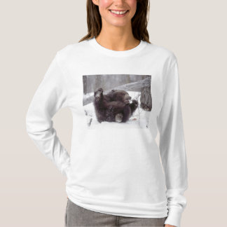 USA, Alaska. Juvenile grizzly plays with tree T-Shirt