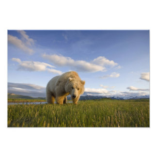 USA, Alaska, Katmai National Park, Brown Bear 3 Art Photo