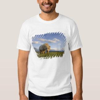USA, Alaska, Katmai National Park, Brown Bear 3 T-shirts