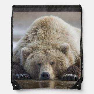 USA, Alaska, Katmai National Park, Brown Bear 4 Cinch Bags