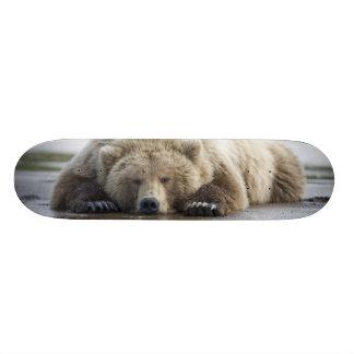 USA, Alaska, Katmai National Park, Brown Bear 4 21.6 Cm Skateboard Deck