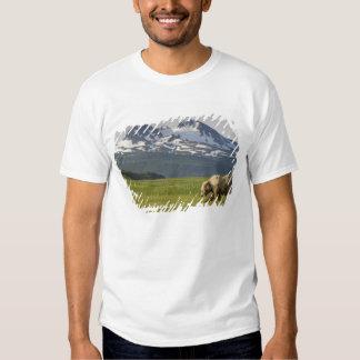 USA, Alaska, Katmai National Park, Brown Bear 5 Shirts