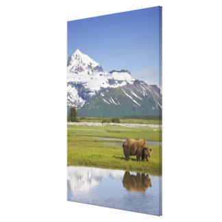 USA, Alaska, Katmai National Park, Brown Bear Gallery Wrap Canvas