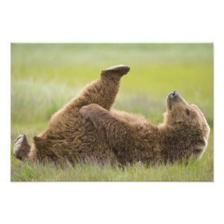 USA, Alaska, Katmai National Park, Brown bear Photo Art
