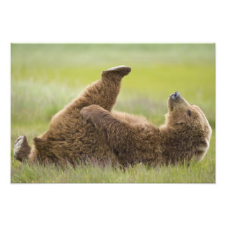 USA, Alaska, Katmai National Park, Brown bear Photo Print