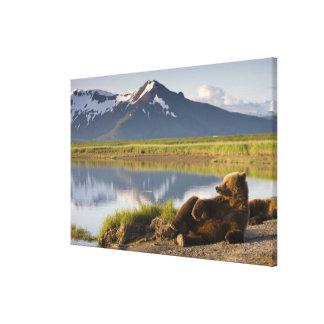 USA, Alaska, Katmai National Park, Brown Bears 2 Gallery Wrapped Canvas